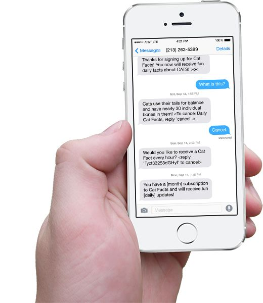 Hand holding iPhone with scrolling Cat Facts text messages