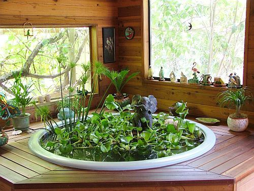 Indoor fish pond and water hyacinth this would be a for Indoor koi pond ideas