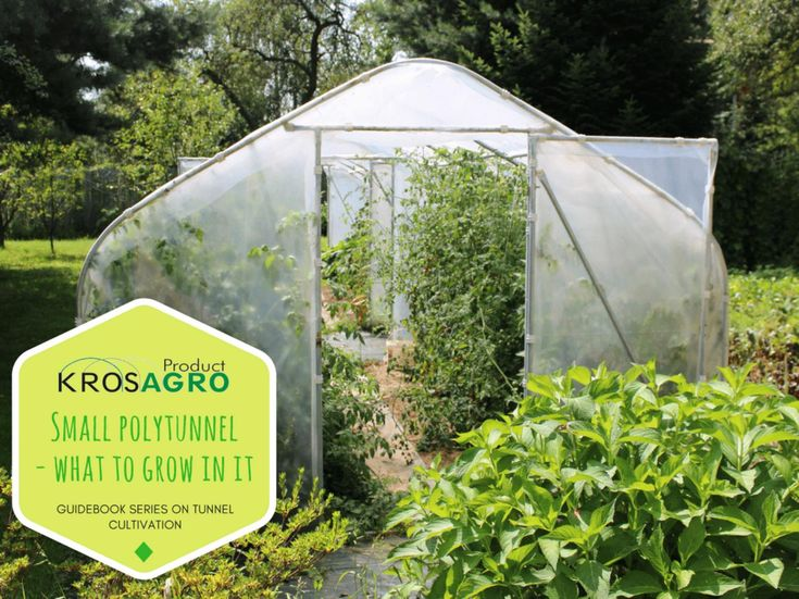 Small polytunnel - what to grow in it