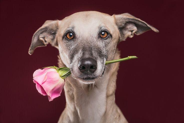 Ich bin Fotografin mit der Spezialität Tierfotografie - also als Pferdefotograf, Hundefotograf, Katzenfotograf im Fotostudio oder auch draußen unterwegs.