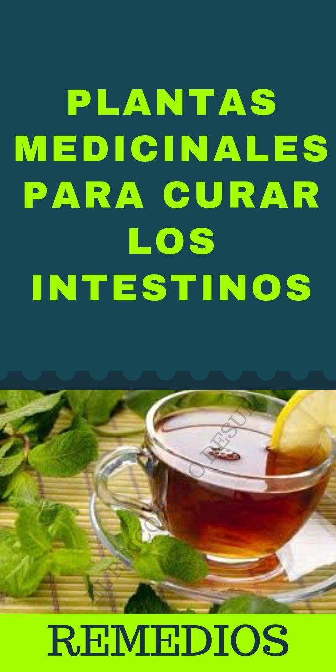 Plantas Medicinales Para Curar Los Intestinos Rinconsito De Sue Intestinos Recetas De Jugos Limpieza De Intestino