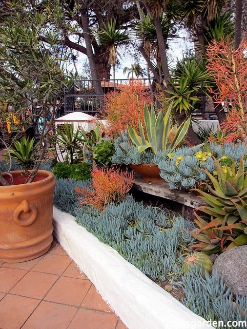 Succulents In Old Town San Diego