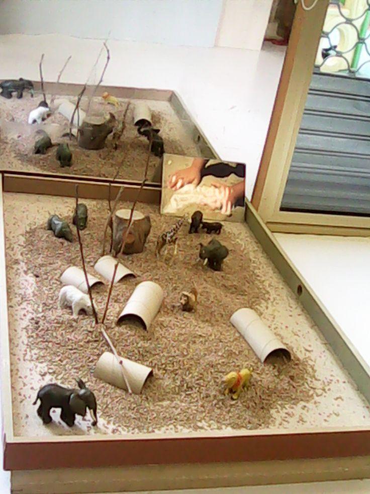 Image result for animal reggio emilia