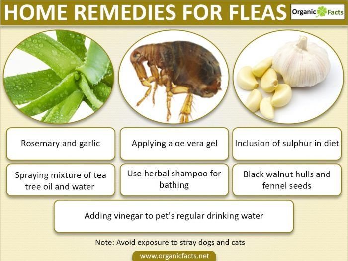 Home remedies for fleas can include usage of rosemary seeds, fennel seeds, garlic, tea tree oil, herbal oils and shampoos, black walnut hulls, Aloe Vera, vinegar and natural borax powder in different forms. Fleas can be very harmful not only for your pets, but for you as well. Fleas and ticks are most commonly found in dogs and cats. It is much easier for them to get fleas as they are exposed to stray cats and dogs and fleas take a minute to spread. It can be transferred easily. Fleas are…
