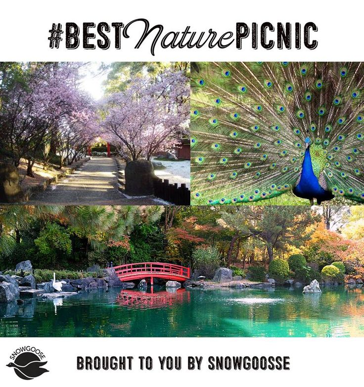 Want to get up close with nature? Auburn Botanical Gardens is a great picnic option whilst the fine weather lasts - 9 hectares of beauty full of native animals and a Japanese garden that will fascinate all ages. #BestNaturePicnic #FamilyPicnics #Picnics #NativeAnimals #SydneysBestPicnicSpots #AuburnBotanicGardens #SnowgooseGiftHampers
