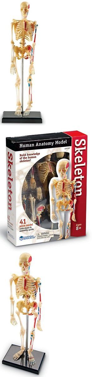 top 25+ best human skeleton model ideas on pinterest | skeletal, Skeleton