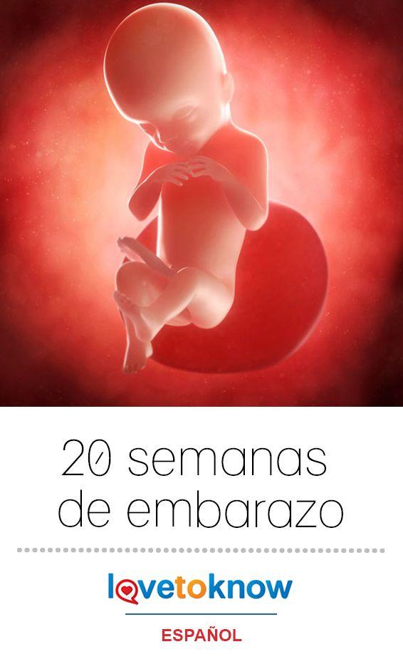 ¡Felicitaciones! Al final de la semana 20, habrás pasado el punto medio de tu embarazo. #baby #bebé #embarazo   20 semanas de embarazo via #LoveToKnowEspañol