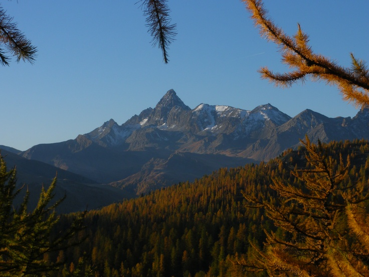 A larch forest beneath the peaks.