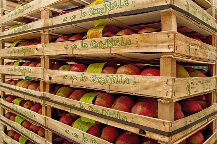 Dal 1994 l'azienda agricola La Coccinella è leader nella produzione di mele pregiate di varietà Stayman, Golden e Fuji distinguendosi per i metodi innovativi di coltivazione.
