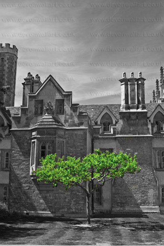 Selective Colourzzz... #Green #Colourzzz #Tree