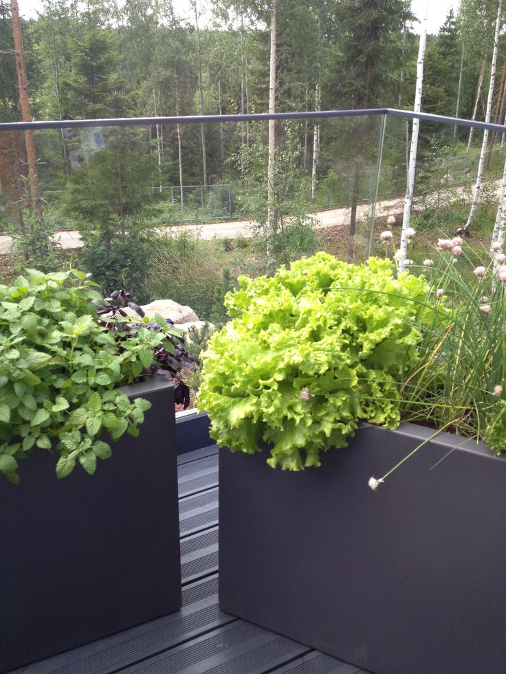 Salads on the balcony