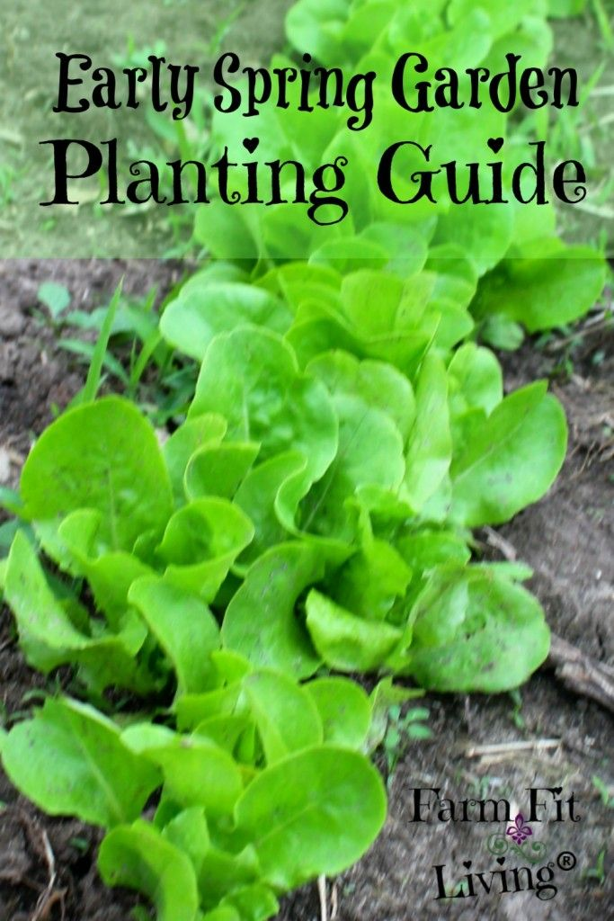 Unsure what to plant for spring? Check out this guide from Farm Fit Living to get some great ideas for veggies that will thrive in the cool weather.