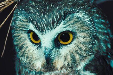 Life Science Birds on Best Owls Kindergarten Ideas On Pinterest Owl Activities Nocturnal