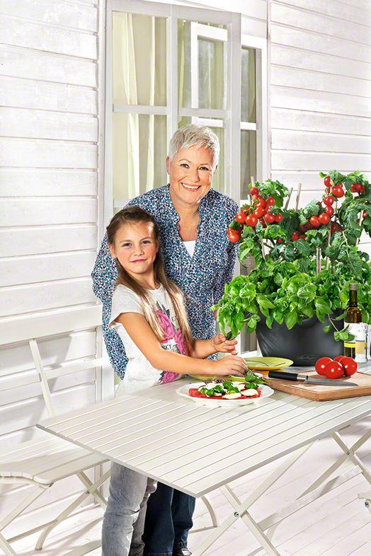 Tomaatintaimet vaativat paljon aurinkoa, ja sopivat siksi tornin ylätasanteelle. Myös basilika viihtyy paahteessa - hyvä tomaatin seuralainen niin yrttitornissa kuin lautasellakin.