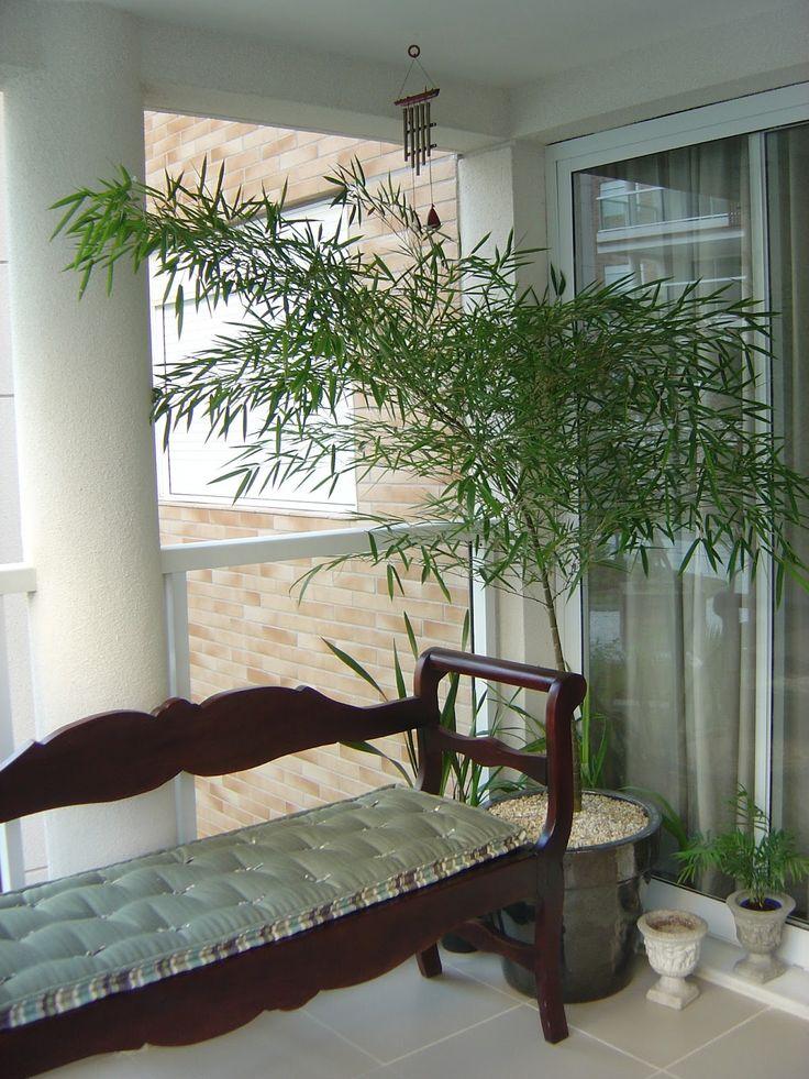 ideias para jardins internosPlantas ideais para ambientes internos