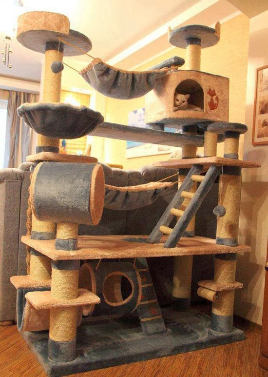 25 best ideas about cat playhouse on pinterest