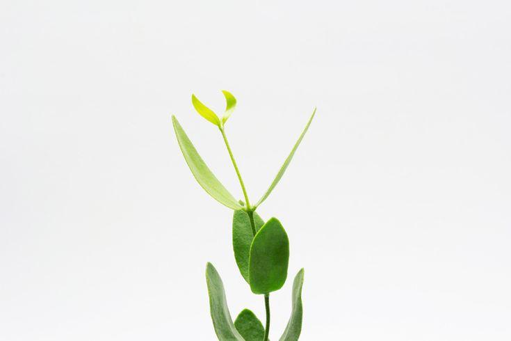 How to Green | Масло жожоба: лучшее натуральное средство для снятия макияжа с глаз
