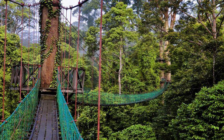 Rainforest Canopy Walkway Wallpaper HD