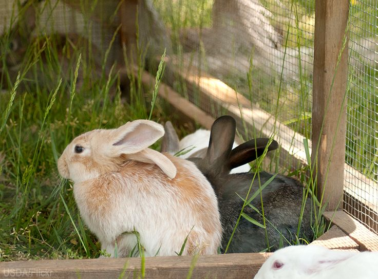 Are Meat Rabbits Right For My Farm? Rabbits can be a great asset to a diversified farm, but make sure you're up to the task.