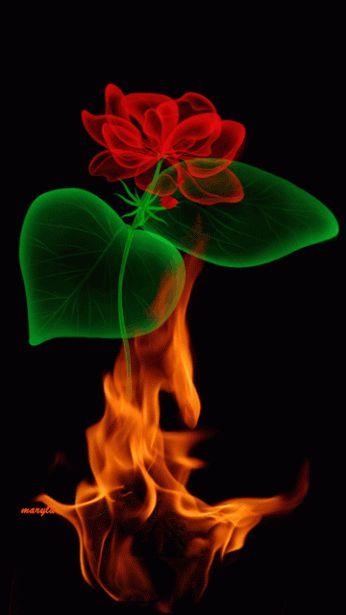 Rosas rojas con movimiento y brillo para google plus - Imágenes de Amor con Movimiento
