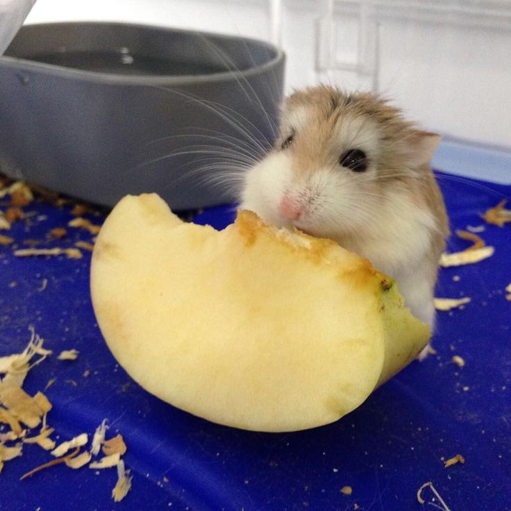 Animal Jobs Near Me (With images) Cute hamsters, Vet clinics