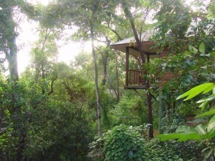 Love this treehouse accommodation! Thala Beach Resort www.greengetawaysaustralia.com.au