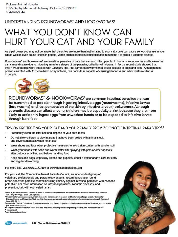 Cats zoonotic intestinal parasites cat care cat