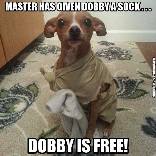 Funny #HarryPotter - Dobby is FREE!