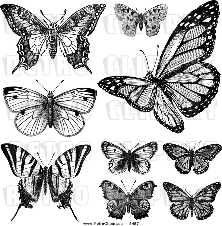 vintage drawings and pictures   Vector Clipart of Retro Black and White Vintage Butterflies on White