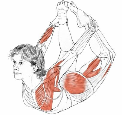 232 best images about yoga anatomy on pinterest  si joint
