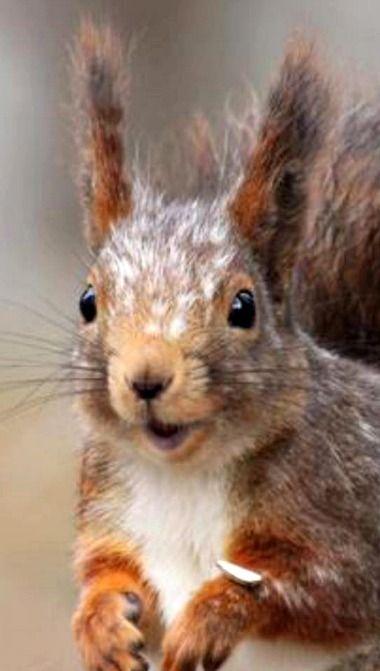 "Squirrel:  ""Good Morning Everyone!"""