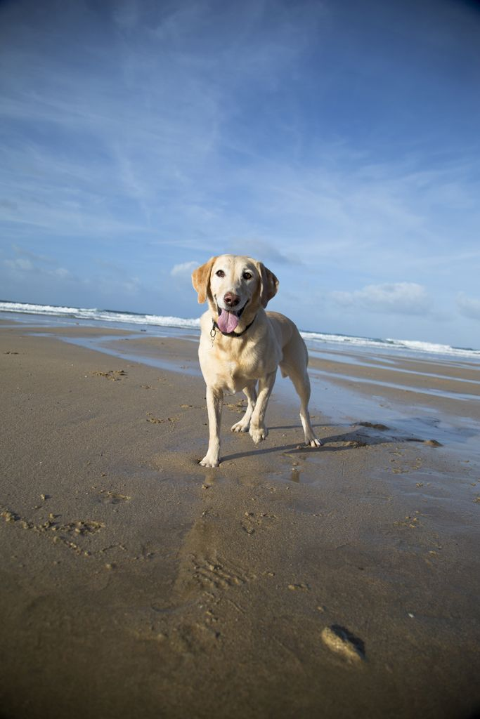Our favourite dog friendly beaches in #Cornwall - Porthtowan Beach Cottages