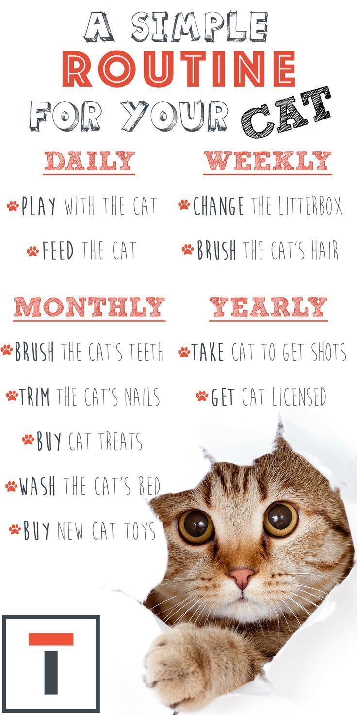 Here Is A Simple Routine For Your Cat Routine Cat Cat Routine Simple Cats Pet Care Cats Kitten Care