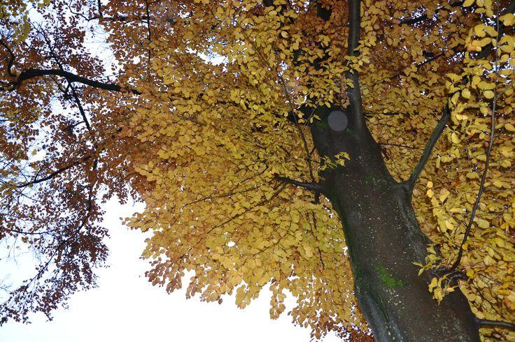 #Herbst, #Laub, #Bäume ©Foto: Sofia Delgado