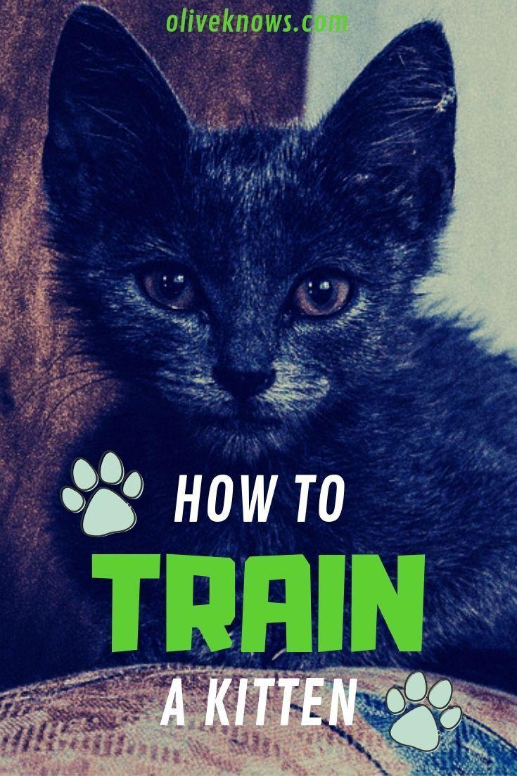 How To Train A Kitten Training A Kitten Cat Training Kitten