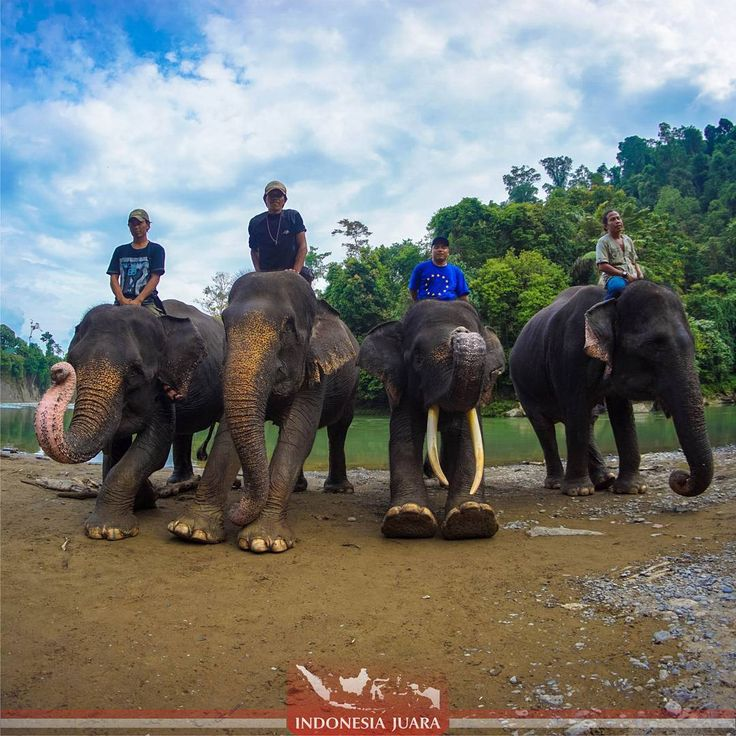 """""""______________________________________ #indonesiajuara mempersembahkan Provinsi SUMATERA UTARA : ______________________________________  FOTO JUARA HARI…"""""""