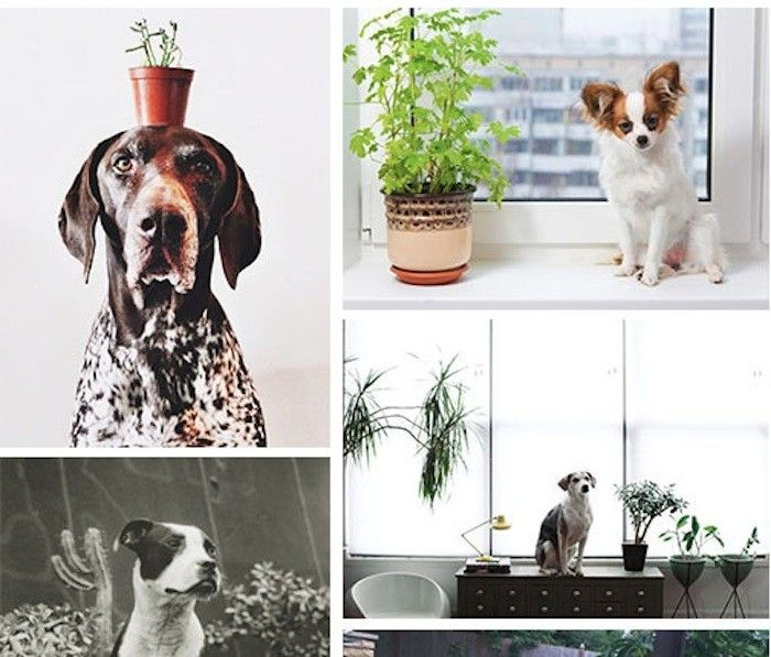 15 best plants interior house images on pinterest for Dog safe houseplants