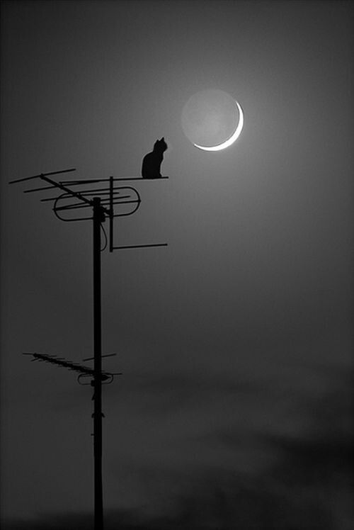 A cat's dream. If it is made of cheese, then surely there are mice on the moon.