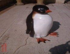 Female penguins Statue