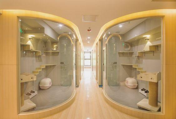 vac luxury cat hotel china