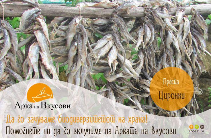 Cironki - Prespa Dried Fish: http://www.slowfoodfoundation.com/ark/details/1792/prespa-dried-fish#.VOEFK_nF-So