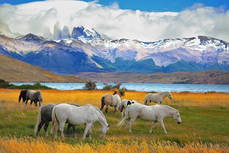 Аргентина, Бразилия и Чили, включая Патагонию - 2016 - Тур из Израиля в Аргентина Бразилия Чили | Турлидер. Отдых, туры, путешествия из Израиля.