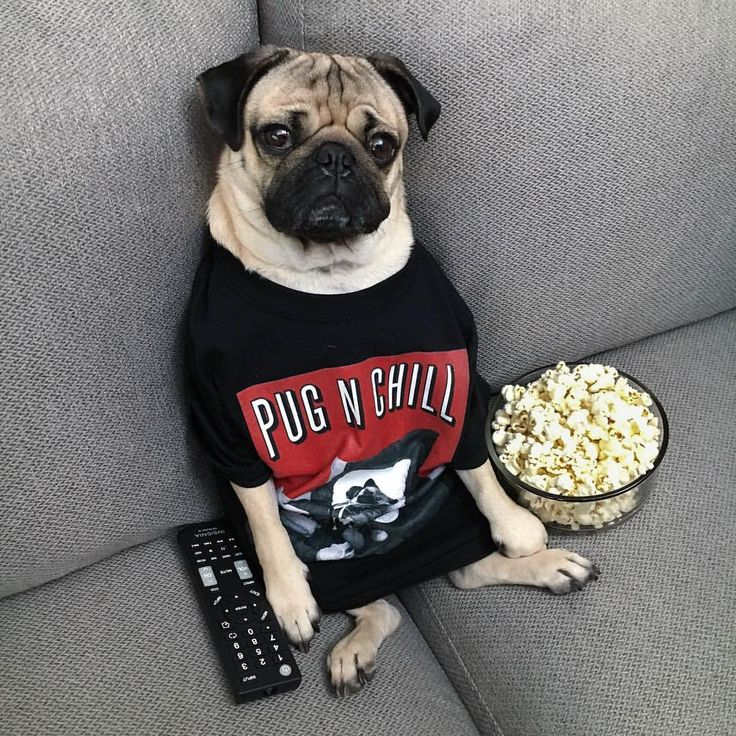 """Pug n Chill tonight?"" -Doug Get this Doug shirt and more at the merch store - www.dougthepugstore.com (link in bio)"