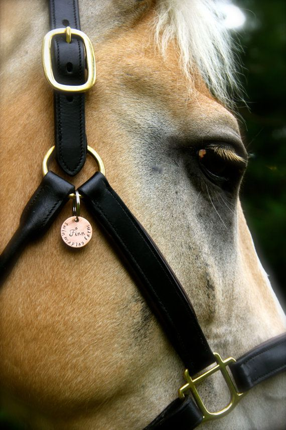 Custom Equestrian Halter Tag / Bridle Tag in Hand Stamped Copper - Perfect Gift for Horse Lovers