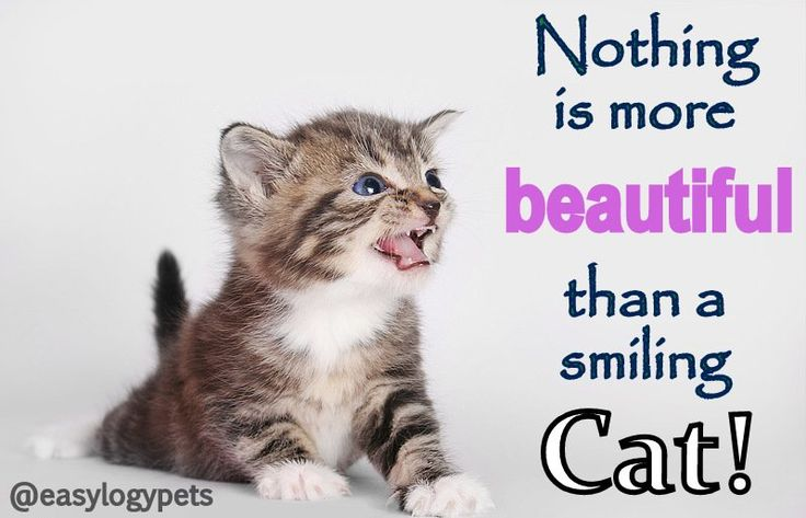 1000  images about cats  u0026 dogs