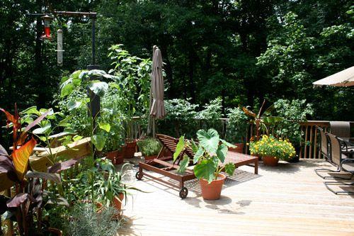 Home tour of Jamie Diersing. The garden.