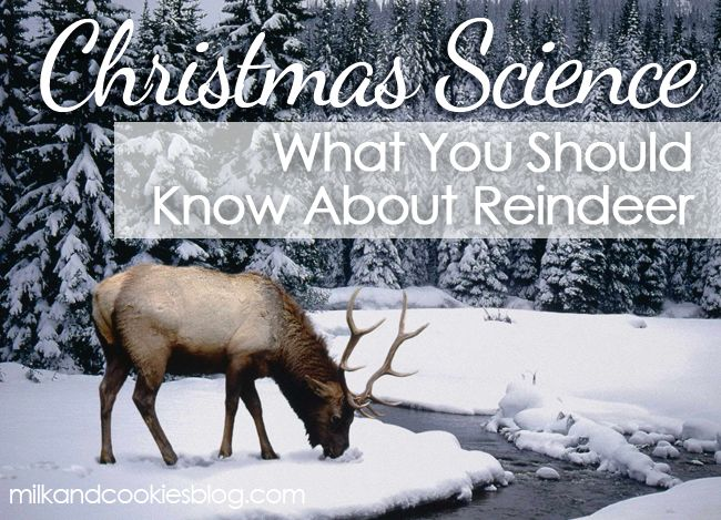 Because of the song Rudolph the Red-nosed Reindeer, these beautiful creatures are are synonymous with Christmas. Here are ten fascinating factsabout reindeer that your kids will be delighted to know.…
