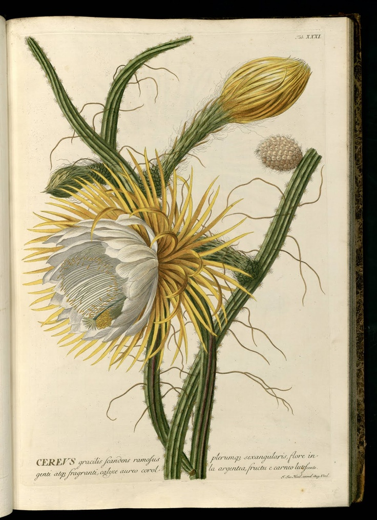 Vintage Ephemera: botanical plates and illustrations