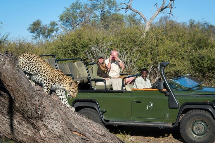 Amazing game drives are par for the course whilst at Tubu Tree Camp in Botswana's Okavango Delta...