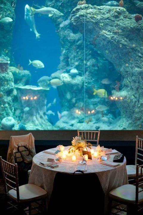 i want an aquarium wedding
